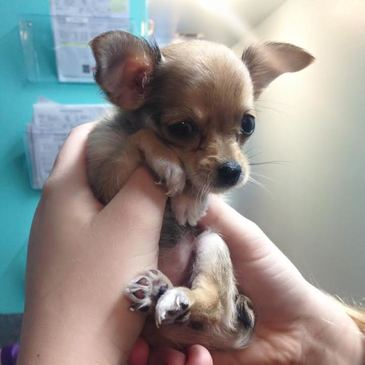 Read Pet Care Veterinary Clinic's Testimonials
